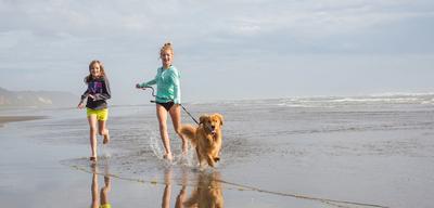 Ein Strandhaus in Holland mit Ihrem Hund: Die perfekte Unterkunft?